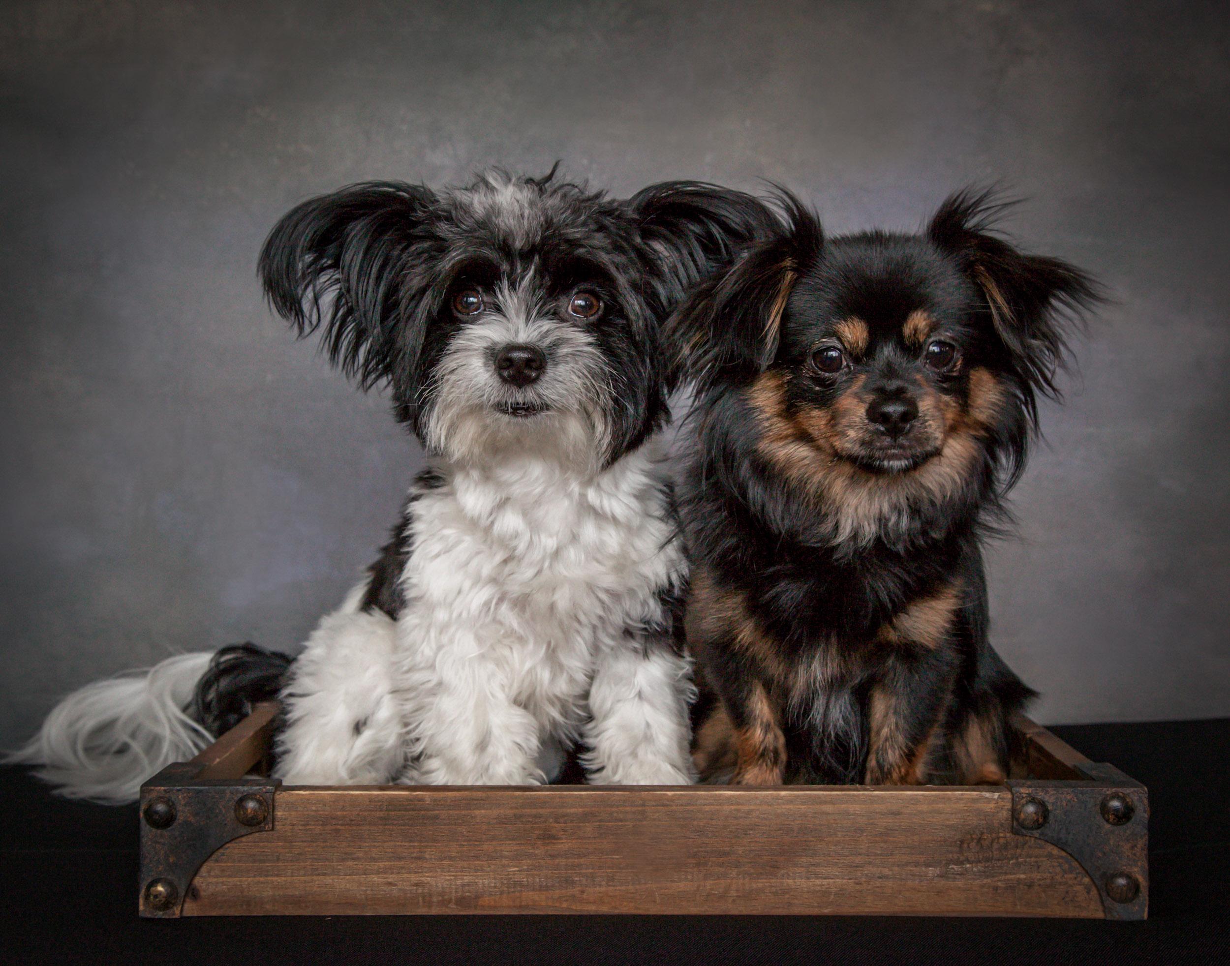 Puppy Dog Pet Photography Portrait