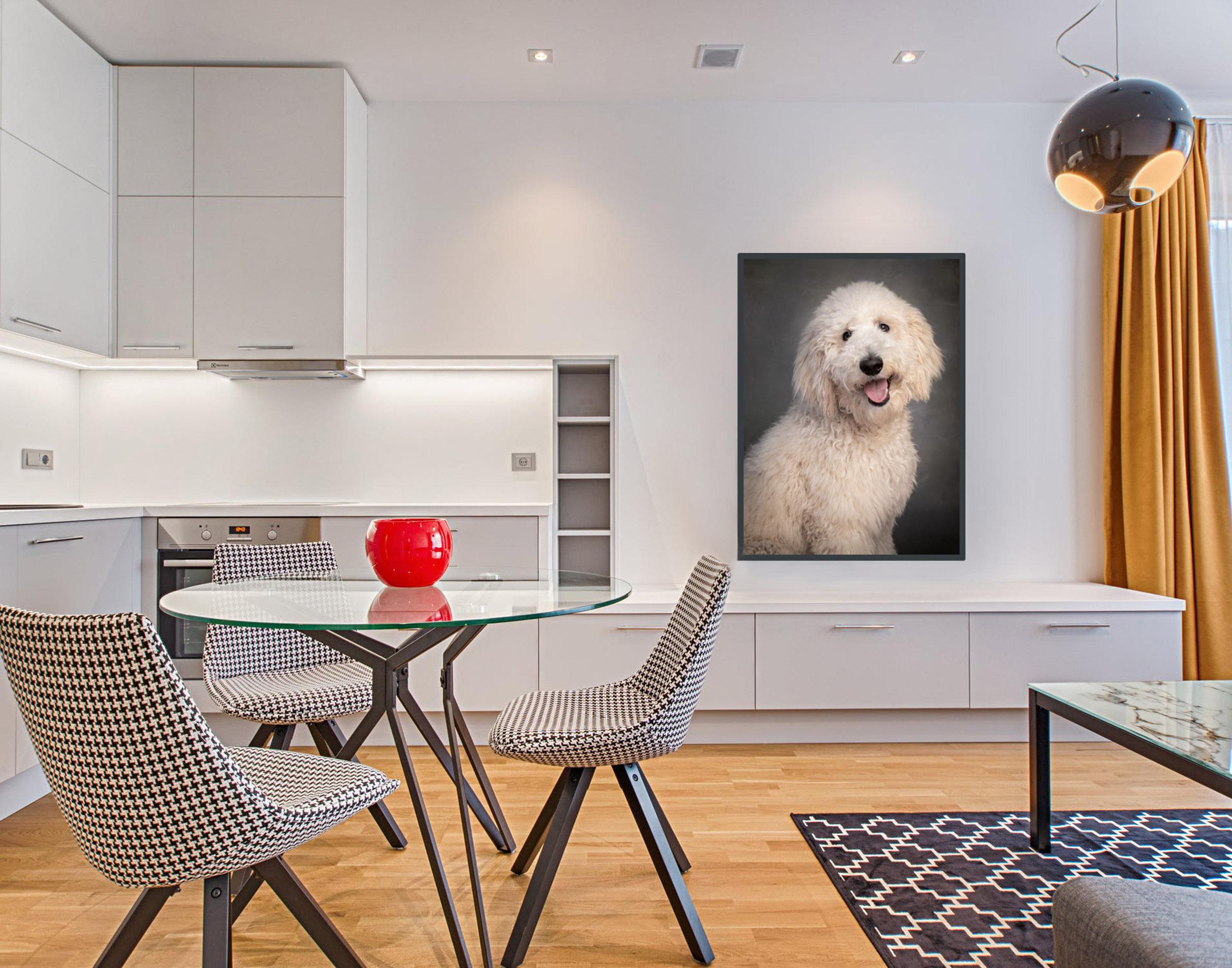Golden Doodle Puppy Pet Photography Portrait