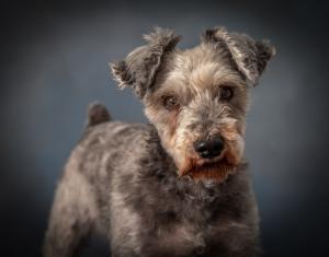 Senior Dog Pet Photography Portrait