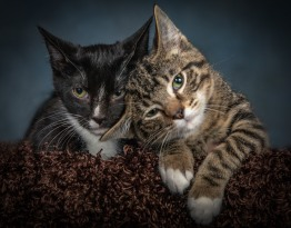 Kitten Pet Photography Portrait