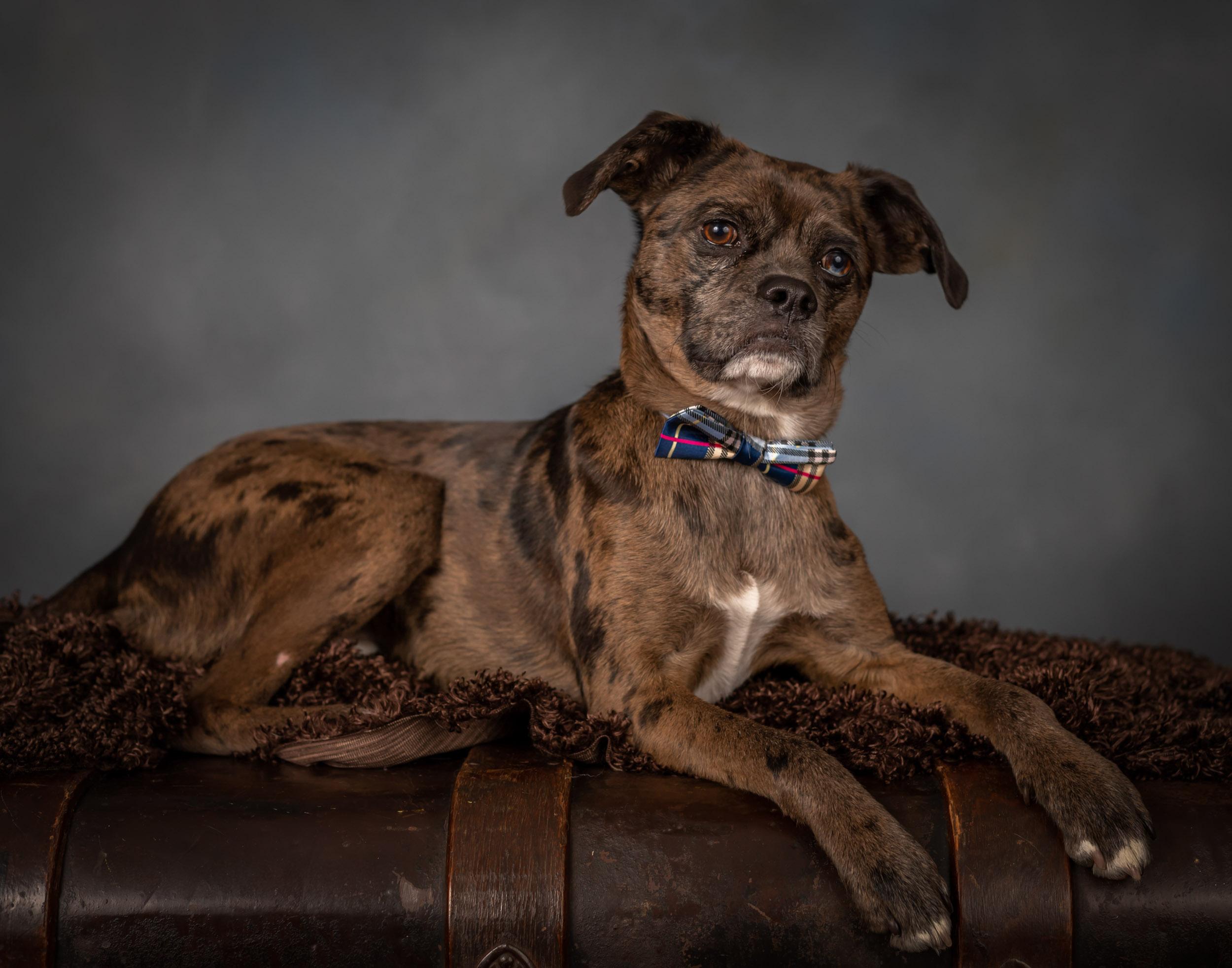 Dog Pet Photography Portrait